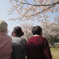 御立公園でお花見をする利用者の方々の後ろ姿の写真